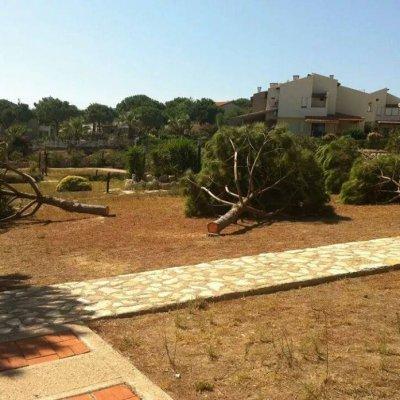 İzmir Çeşme Dalyan'da Erbil sitesi magandaları ağaçları kestiler.